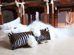 inciter son chat à jouer